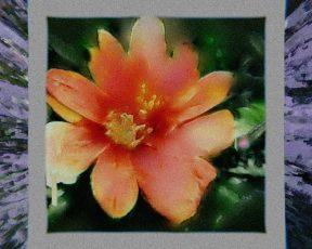 """Leia a letra e tradução de """"Roses/Lotus/Violet/Iris"""", do """"Petals For Armor"""""""